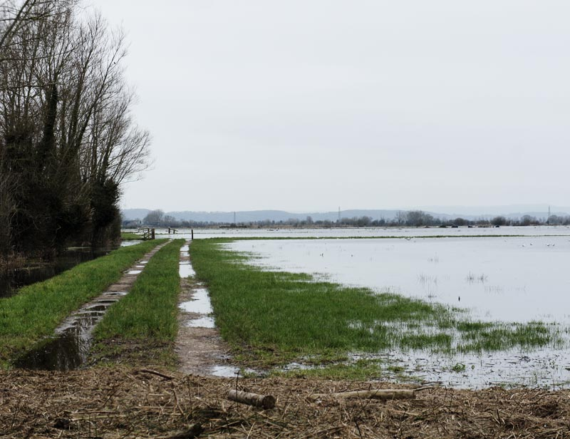 campo-inundado